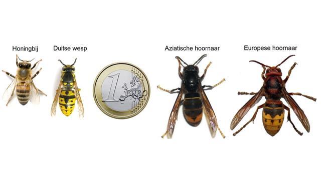 Bij-wesp-1€-AH-EH